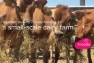 Together towards circular farming #2: a small-scale dairy farm